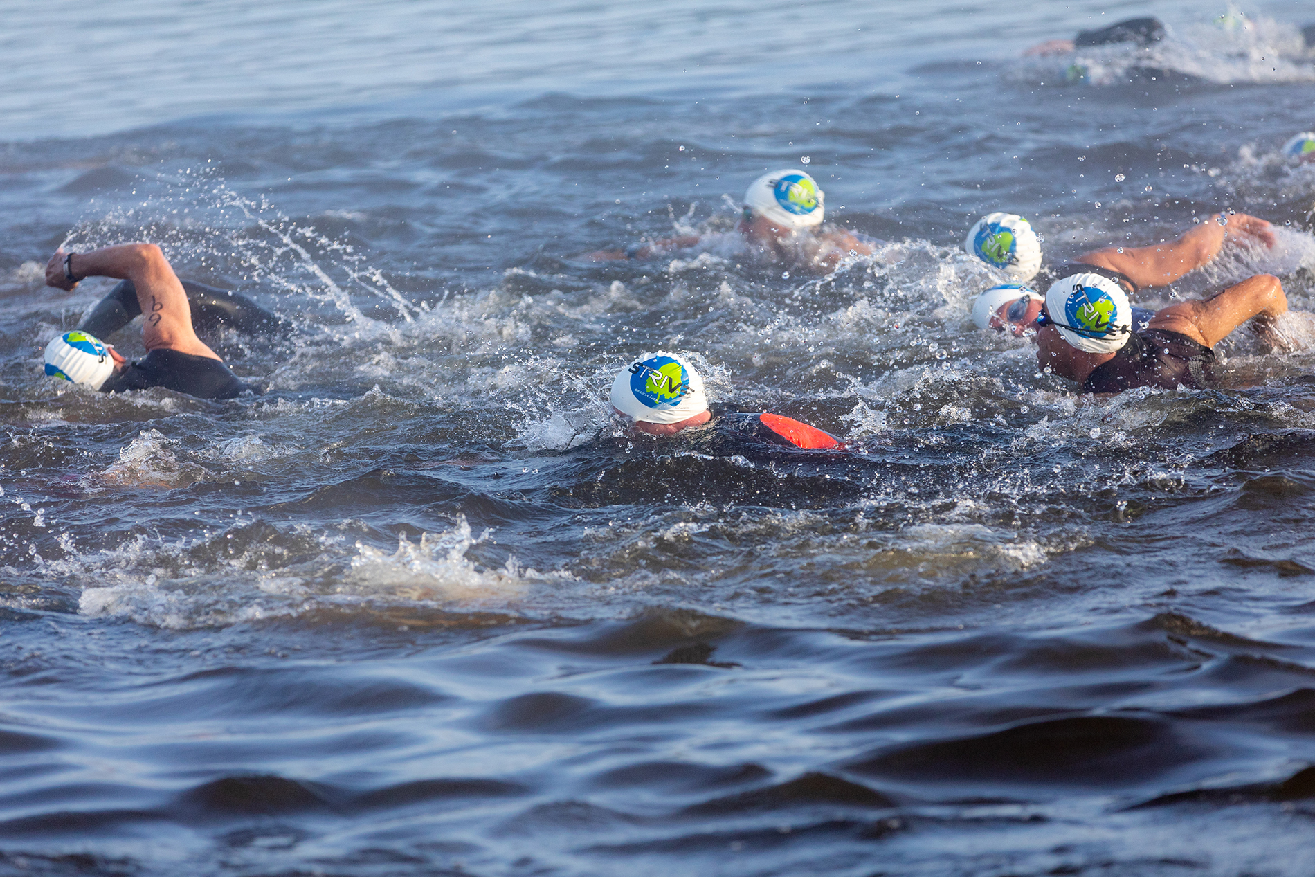 swimmers at the start of race
